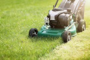 Bien choisir son gazon pour une pelouse verte et grasse