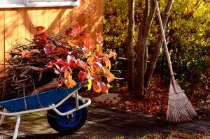 Conseils pour prendre soin de son jardin en automne